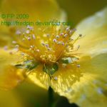 yellow tentacular flower by FredPin