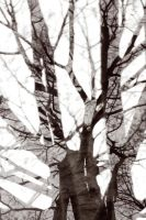 Abstract ::tree:: by dr-snoggle