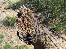Fence Post by dozalt