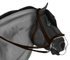AIHR HGSHorses Prize by EquusEquidae