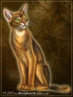 Abyssian cat by BlackMysticA