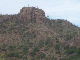 mountain and saguaros by we-are-the-remnants