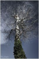 Reach for the sky by Argolith