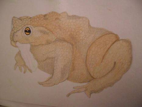 Watercolour Toad by SamanthaHaf