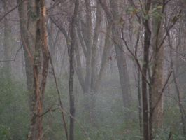 Fog in the Trees 1 by magenta-stock