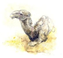 Camels VI by amwah