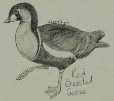 Red Breasted Goose Pencil Drawing by LazuliLupin