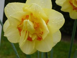 In Memoriam by GeckoMedia