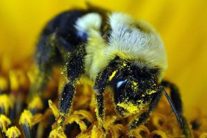 Bee by szink3519