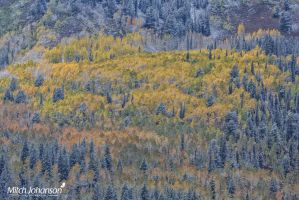 Aspen Painting by mjohanson