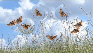 butterflies in bubbles by digimages