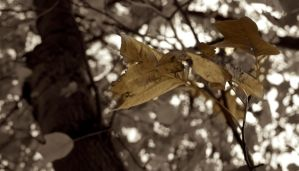 Autumn Leaves by LouisTN