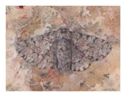 Peppered Moth by MBKKR