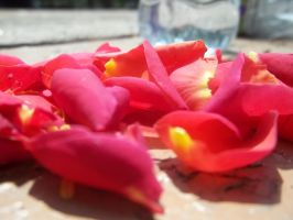 Rose Petals by POETRYTHROUGHLENS