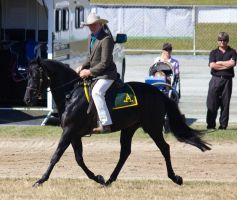 STOCK - Gold Coast show 132 by fillyrox
