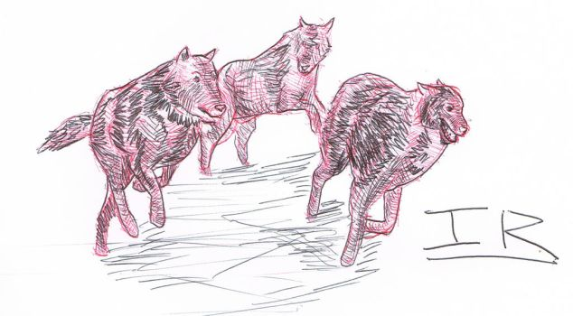 Wolf Pack by IzaakShoelaces
