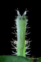 Moth Pupa by melvynyeo