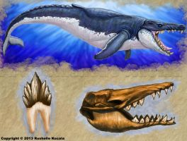Basilosaurus by TheDragonofDoom