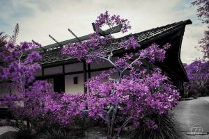 Violet Japanese Dreams by Swaptrick