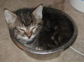 Kiras Water Dish by icedragon2008