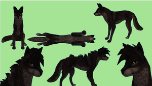Wolf/Canine Preset Auction by FabouCaribou