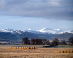 Conon bales by piglet365
