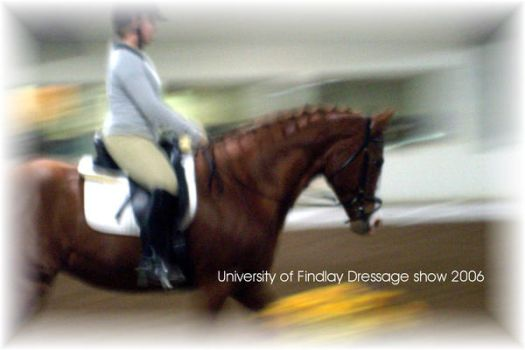 dressage 2 by riley81995
