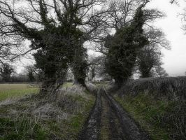 February Lane by Spikey-T