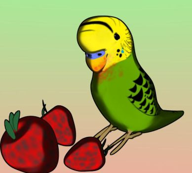 A Budgie And 3 Strawberrys by Ziwon