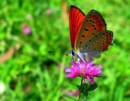 PhotoButterfly by nurisagaltici