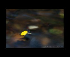 Abstract Nature 5742 by DG-Photo