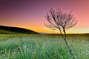 Wild flowers at sunset by MarcioCabral