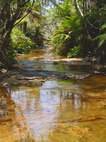 Creek at the Blue Mountains by Charmed-Ravenclaw
