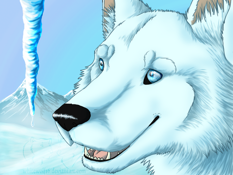 Winter's pretty colours by UKthewhitewolf