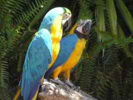 Macaw by claudiafale