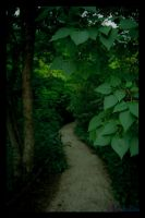 Into the Woods by Mithalis
