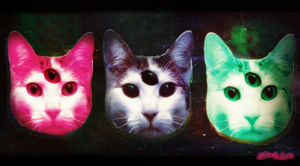 ufo cats by hummeri9