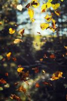 Fall by elsson