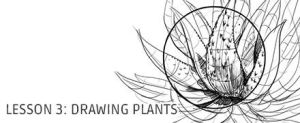 Lesson 3: Drawing Plants by irshadkarim