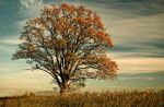 Autumn Tree by Dave-Ellis