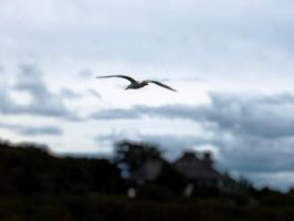 seagull 2 by plaidfox24