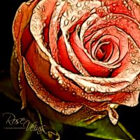 Rose Veins by eyedesign