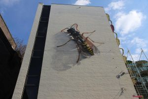 Wasp by penfold73