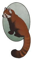 Red Panda by Hymnsie