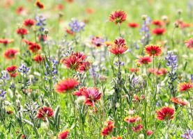 Wildflowers by embethe