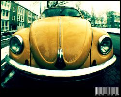 The Happy Beetle. by privatepino
