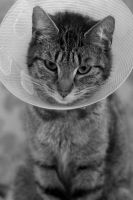 Cone of Shame by citrusandlime