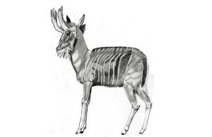 2nd Antelope-Type For Book by mmpratt99