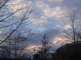 Sky and Trees 014 by Party-Hat-Cat