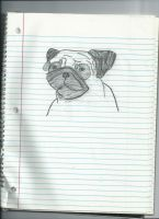 Pudgie the Pug by Puglover24